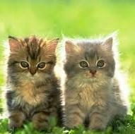uczulenie na koty proviva