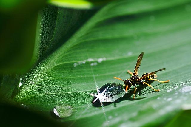 Proviva insekty testy