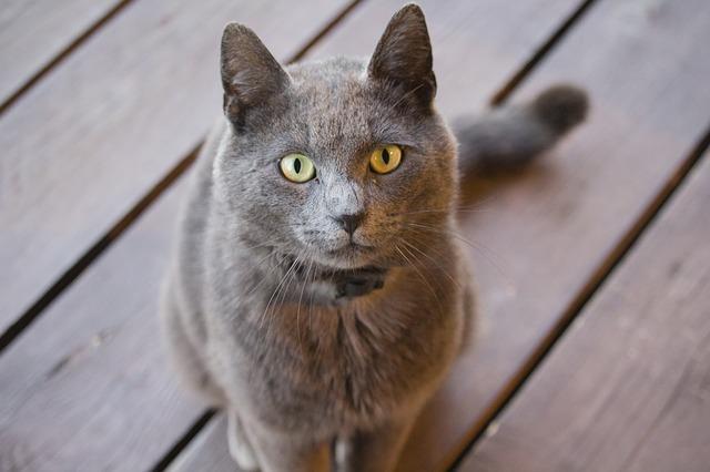 Sierść kota jako alergen