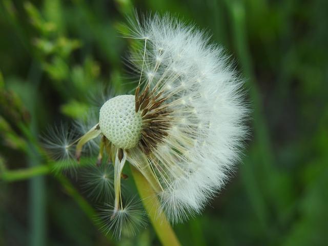 Proviva testy na pyłki
