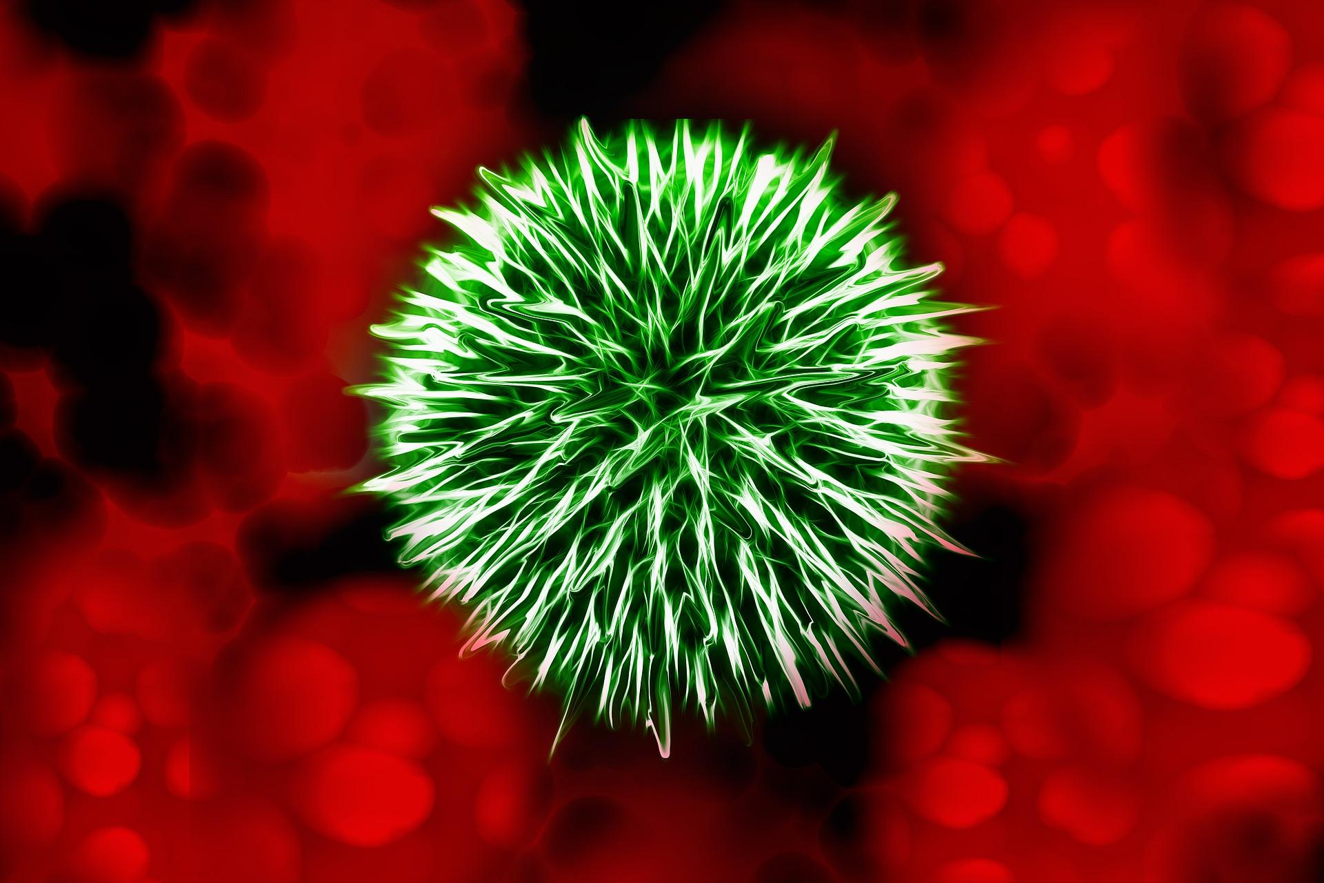 Borelioza wrocław biorezonans