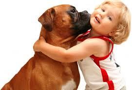 odczulanie na psa proviva